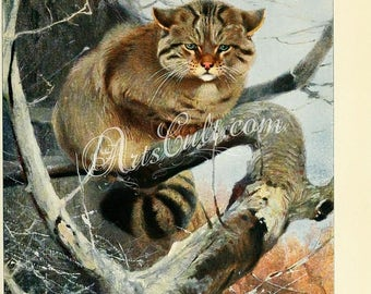 mammals-02869 - Wild Cat sitting on tree branch vintage digital printable picture image jpg graphics desigh artwork art print painting cats