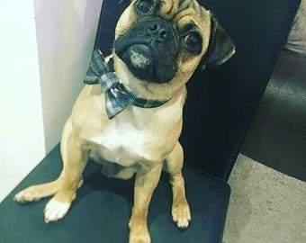 Plaid Dog Collar, Personalised Collar, Personalized Collar, Boy Dog Collar, Large Dog Collar, Small Dog Collar, Bow Tie Dog, Pet Collar