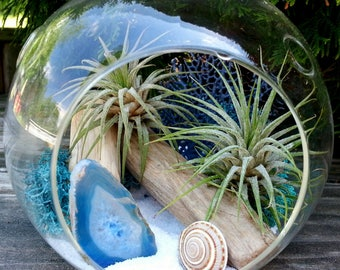 Air Plant Terrarium Kit Large Hanging Terrarium Father's Day Gift Driftwood Blue Agate Birthday Gift Thank You Gift