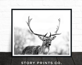 Deer Print, Woodland Animals, Black and White Photo Prints, Large Wall Art, Woodland Nursery Decor, Wall Art, Animal Prints, Printable Art