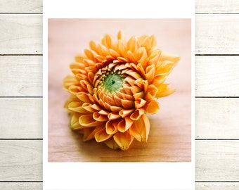 Orange Dahlia Digital Download Fine Art Print 8x8 size, Home Decor, Wall Art, DIY, Printable, Photography, Flowers,