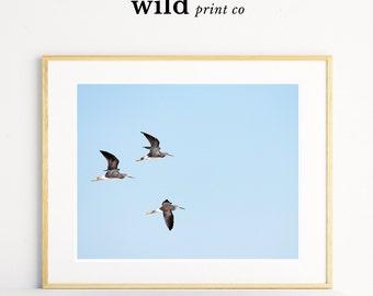 Bird Prints, Bird Wall Art, Minimalist Art, Wall Art Prints, Bird Photography, Nursery Wall Art, Baby Room Decor, Digital Print