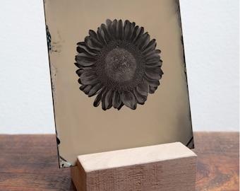 Tintype of Sunflower
