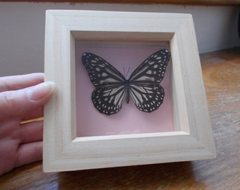 Pretty, Individually framed butterfly