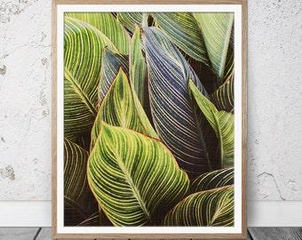 Green Leaves, Wall Art Photo, Art Photo, Modern Minimal, Instant Download, Home Decor, Green Leaves Art Photo, Botanical Poster