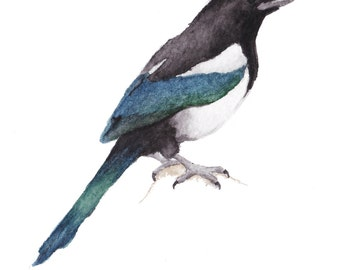 Magpie Giclee Print