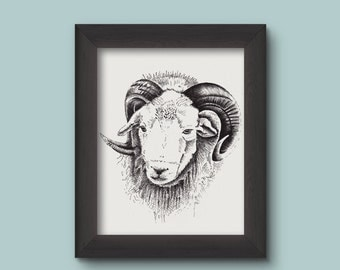 Herdwick Ram  |  Ram Picture | Ram Print  | Animal print | Herdwick sheep | Ram horns | Ram Art | Wall Art