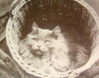 SALE Vintage RPPC (Cat in a Basket)