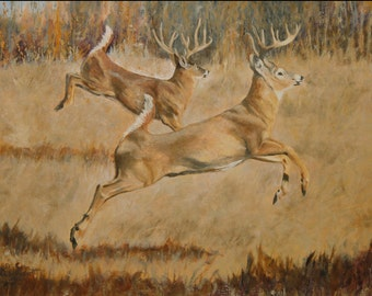 Two Whitetails