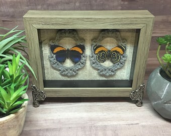 Superb Numberwing Butterfly Framed Shadow Box
