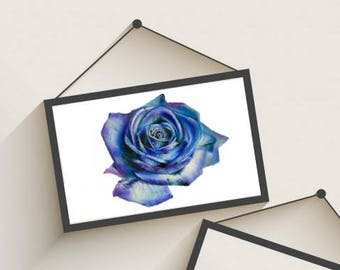 Blue Green and Purple Rose Drawing Print - Wall Art - Flower - Teal