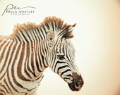 zebra photo, nursery art, sepia print, childs room decor, nursery decor, sepia art, nature photo, cream art, cream photo, baby animal art