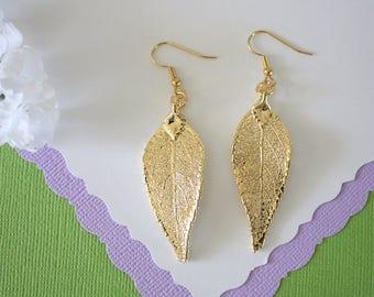 Gold Leaf Earrings, Evergreen Leaf , Real Leaf Earrings, Real Gold Evergreen Leaf, Gold, Nature, LEP62