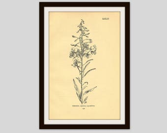 "Rustic Flower Print, Wildflower Art, Antique Botanical Illustration, Neutral Color Decor, 5 x 7.75"", Vintage Floral Wall Art, Fireweed (231)"