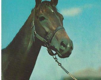Vintage Alfred Mainzer #887 Horse Lithograph Postcard, 1943-1964