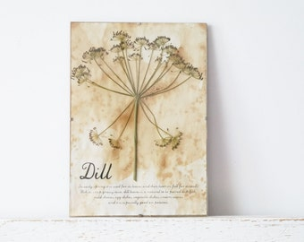 Pressed Herbs- Dills in Frame (3)