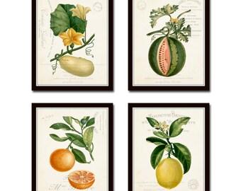 French Fruit Collage Print Set No. 13, Vintage Fruit Print, Wall Art, Giclee, Art Print, Botanical Print, Fruit Print, French Style Art