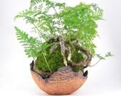 Ochre Bark Planter, Tan Kusamono Pot, Eggshell Bonsai Planter, Small Succulent Planter, Shallow Plant Pot, Bonsai Accent Pot 10-16-82