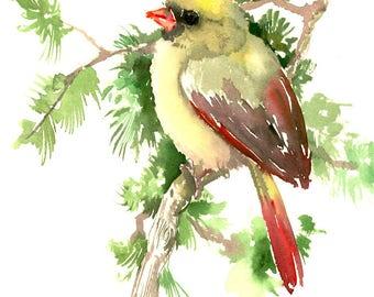 Cardinal, Bird Artwork, Female Cardinal in The Spring, 12 x 9 in, brigh red, christmas gift painting, cardinal bird lover art