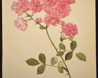 Pink Floral Print Pink Rose Print Flower Print Floral Plate