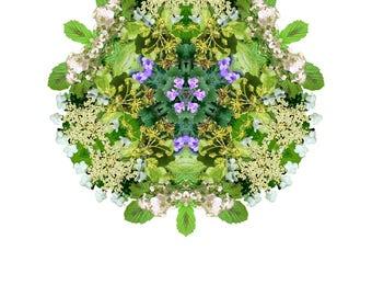 Botanical Mandala - English Spring Hedgerow II: Giclée print