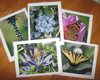 Five assorted photo note cards