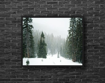Evergreen Photography - Winter Forest Print - Snowy Forest Photo - Winter Nature Photo - Winter Wall Art - Forest Wall Decor - Green White