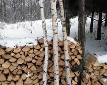 Items similar to white paper birch log real wood fresh for White birch log crafts