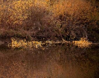Pond reflection, fall photo, rustic office wall decor, bronze rust cinnamon, Colorado art, cabin wall art, fine art photography, square fall