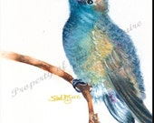 "Watercolor Print ""Blue Hummingbird"" by Sandi McGuire"