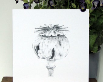 Blank greeting card - Botanical art pencil drawing 'Papaver somniferum Opium Poppy seed pod' printed in black ink on white original artwork