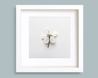 Flower Art Print, White blossom floral Photo, Wild Cherry flower, Minimalist, Nature Photography, Home Decor, 5x5, 8x8, 9x9, 10x10, 12x12