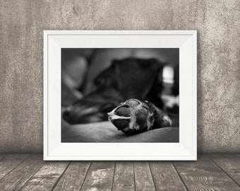 Pet Photography Decor, Black Lab Print, Dog Picture, Animal Wall Art, Puppy, Black Labrador, Home Decor, Office Decor, Black and White, ACEO