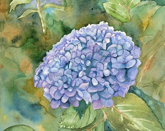Hydrangea - Giclee watercolor print, 12 by 9 inches