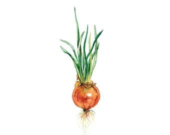 Onion - Art Print