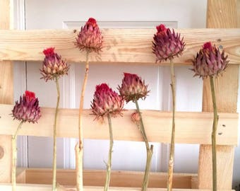 Dried Artichoke Flowers, dried artichoke heads - Floral Supplies, Real Flowers Dried, Natural Home decor