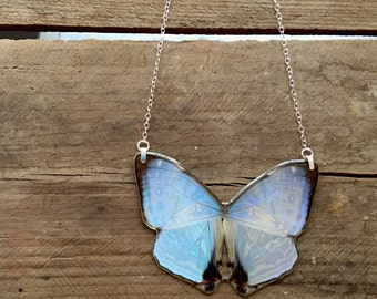 """Real Morpho Sulkowski statement necklace- a whole iridescent morpho butterfly in resin, sterling silver bails and 18"""" sterling chain"""