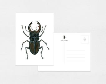 Beetles Watercolor Postcards | 4.25 x 5.5 in