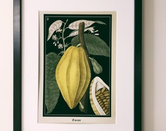 Chocolate Botanical Print - Vintage Cacao Botanical Poster - Vintage Style Kitchen Wall Art - Large botanical poster - Museum Quality