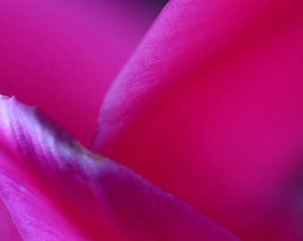 In The Pink, Surreal Macro, Cyclamen Petals, Close Up, Bokeh Blur, Background, Detail, Abstract, Art Photography, Digital Download, DIYprint