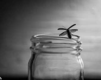 Prints - Black and White Firefly on a Jar