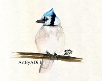 Blue Jay- Fine art print