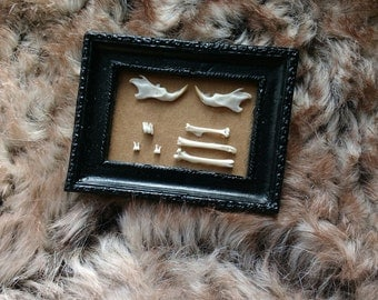 Miniature Mouse Bone Display - Taxidermy - Curio - Oddity - Natural Art - Bones - Dolls House