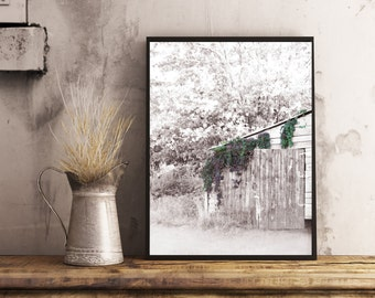 shed with vine,  Digital download, printable photography, rustic picture, old building picture