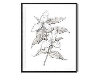White Trillium Print, Flower Art, Botanical Illustration, Wall Art, Blossom Floral Art, Flower Drawing, Botanical Flower Print, Flora Print