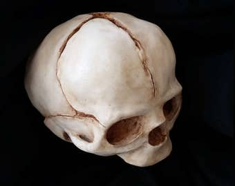 Hand-made Human Fetal Skull Replica