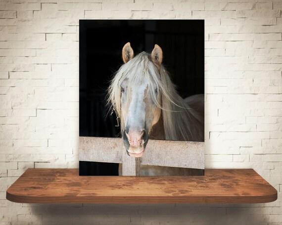 Horse Photograph - Fine Art Print - Black & White Photography - Equine Wall Art - Wall Decor -  Horse Pictures - Farm House Decor - Horses