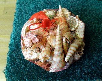 Sea Shells - Phillippenes