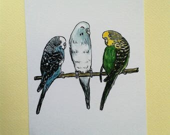 Budgie Gang, budgies, budgie illustration, budgerigars, budgerigar, birds