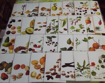 160 plates engravings thermoplastic Larousse, various, Botany, Crocus, SafranFruits mulberry, vanilla, cherry, raspberry mushrooms vegetables